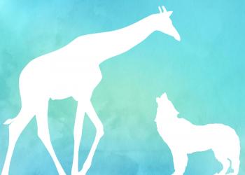 Giraffe und Wolf stehen sich gegenueber